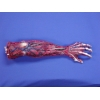 Skinned Left Arm
